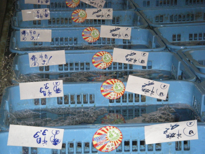 築地の活魚売場